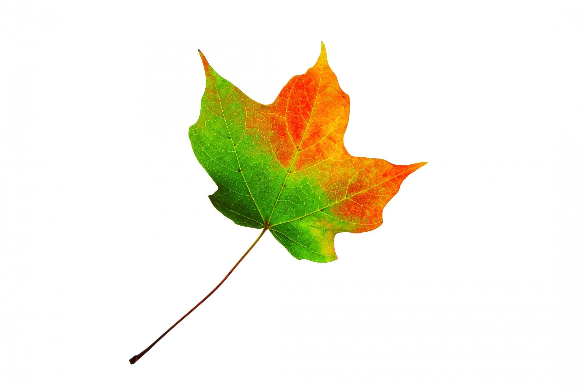 leaf-changing-color